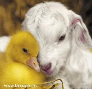 animalele iubesc