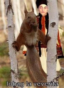 iobag la veverita