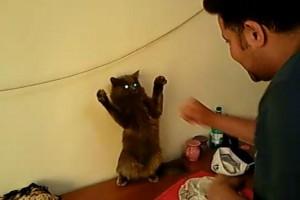 Pisici amuzante - video
