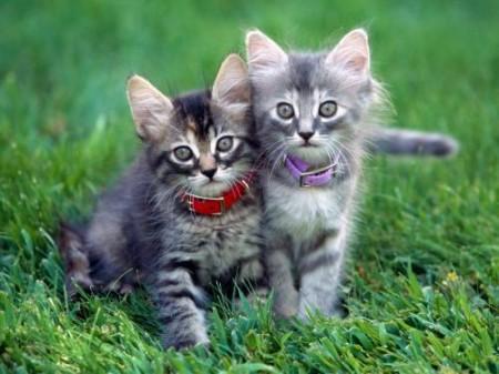 pisici iubitoare