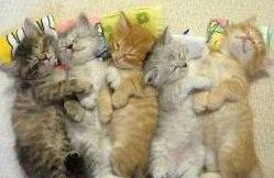 balada pisicii