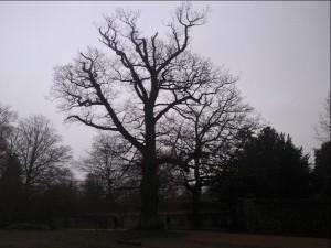 copacii mor in picioare