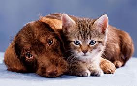 masaj cu surprize- cainele si pisica - video
