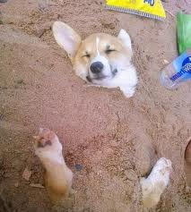 caine in nisip